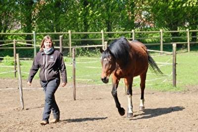 Paardencoaching & Yoga